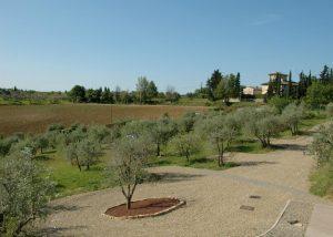 Camping Agricamping Romita Italië - glamping vakantie met olijfbomen in een luxe Safaritent boek nu bij www.luxetenthuren.nl